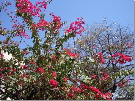 flores BH 074