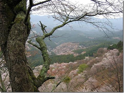 Monte Yoshino 2