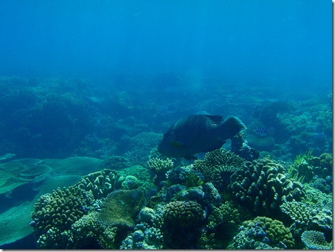 corais austrália2