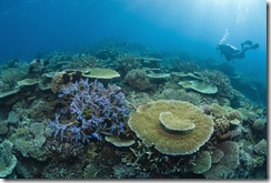 mergulhador corais austrália