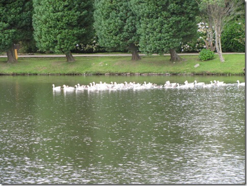 lago 5 e os patos