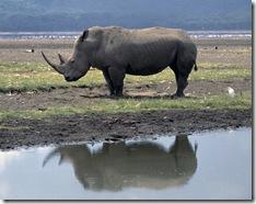 White-Rhino-at-Lake-Nakuru