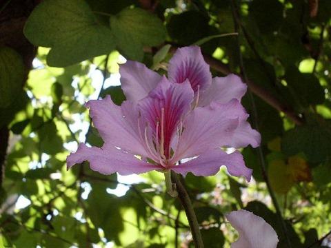 14_Flores e colorido